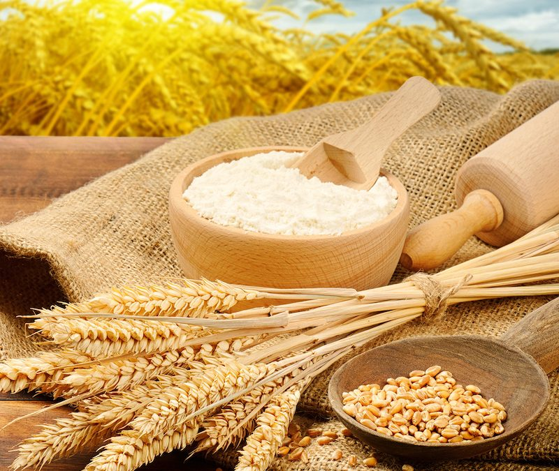 Media release: Shelling out the dough for grain research